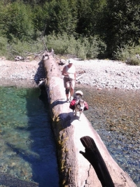 Andi log crossing